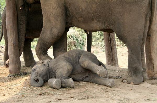 Слоненку 8 месяцев